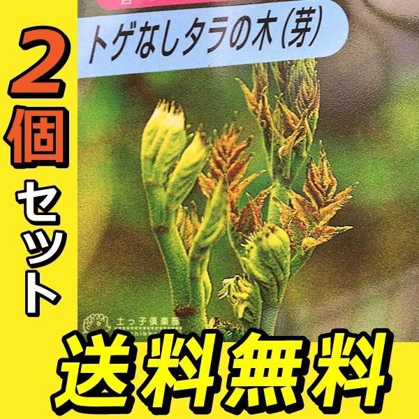 トゲなし「タラの芽の木」12cm(4号)ポット 2個セット 送料無料|produce87|03