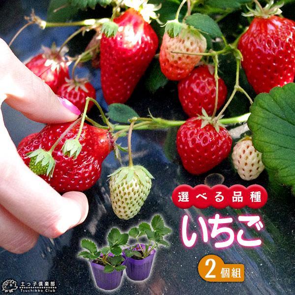 選べる品種 いちご苗 9cmポット苗 2個組 produce87