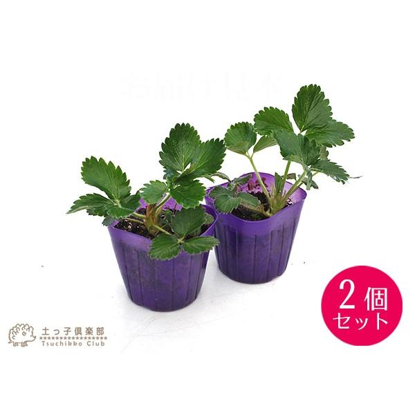 選べる品種 いちご苗 9cmポット苗 2個組 produce87 02