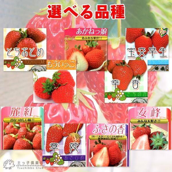 選べる品種 いちご苗 9cmポット苗 2個組 produce87 04
