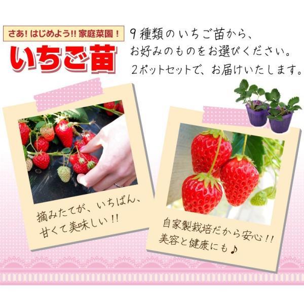 選べる品種 いちご苗 9cmポット苗 2個組 produce87 06