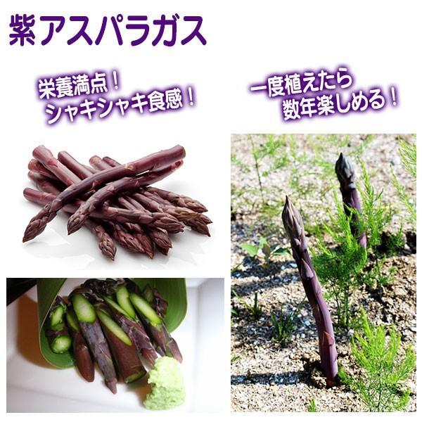 紫アスパラガス苗 10.5cmポット苗 (2年生) produce87 05