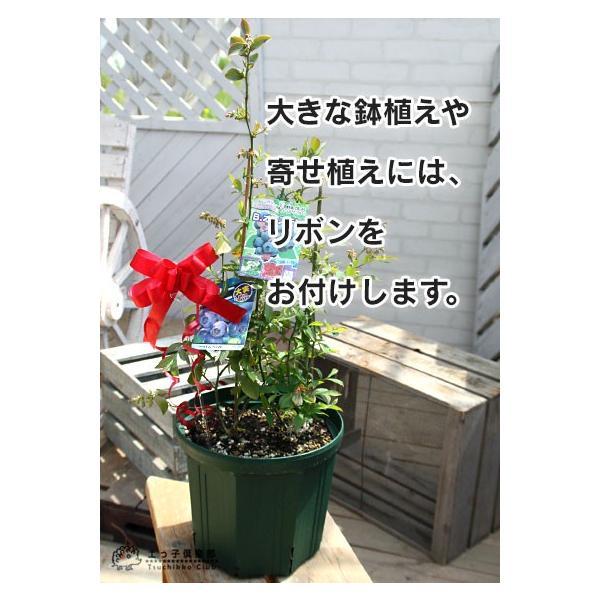 簡易ラッピング produce87 04