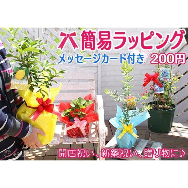 簡易ラッピング produce87 06