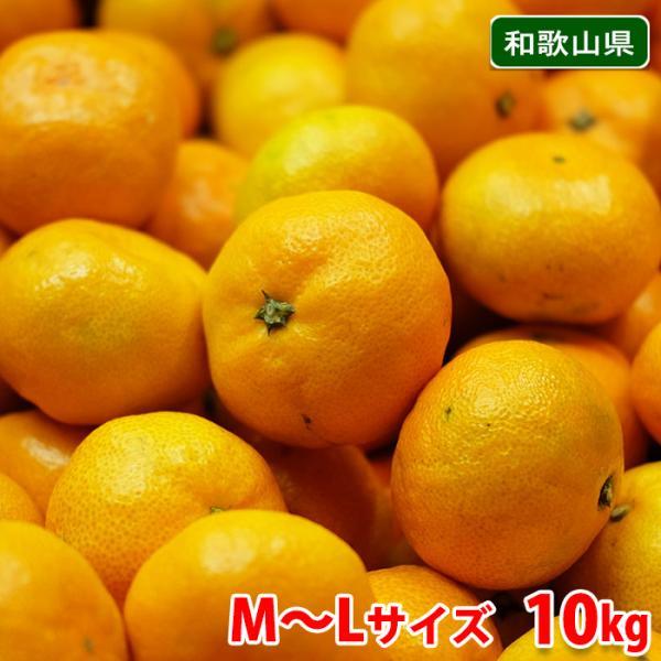 送料無料 和歌山県産 有田みかん 秀品 L〜Mサイズ 10kg