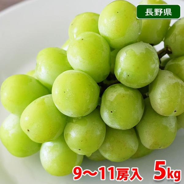 送料無料 長野県産 シャインマスカット 9〜10房入り 5kg