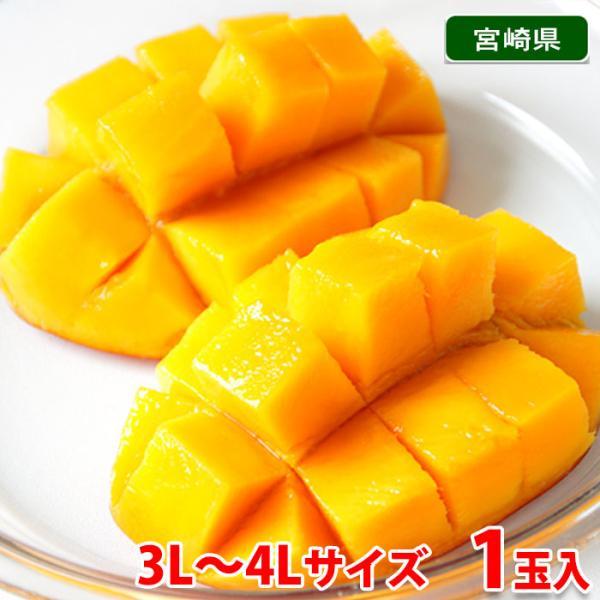 【送料無料】宮崎県産 完熟マンゴー 3〜4Lサイズ 1玉(1パック)