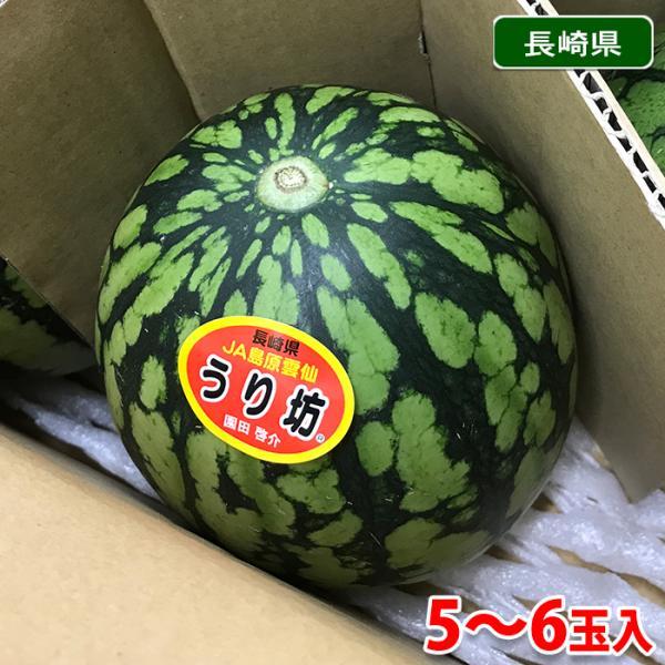 【送料無料】長崎県産すいか URIBO(うり坊)5〜6玉入り/箱