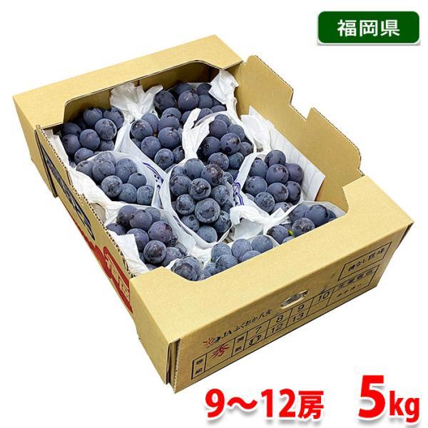 送料無料 福岡県産 種なし巨峰 秀品 9〜12房入 5kg