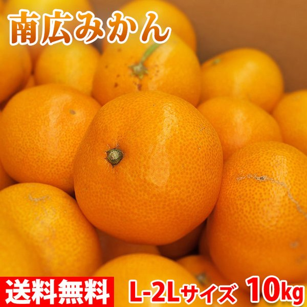送料無料 和歌山県 有田みかん 南広(なんぴろ)みかん Mサイズ 10kg
