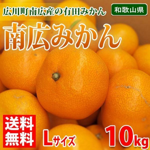 送料無料 和歌山県 有田みかん 南広(なんぴろ)みかん Lサイズ 10kg