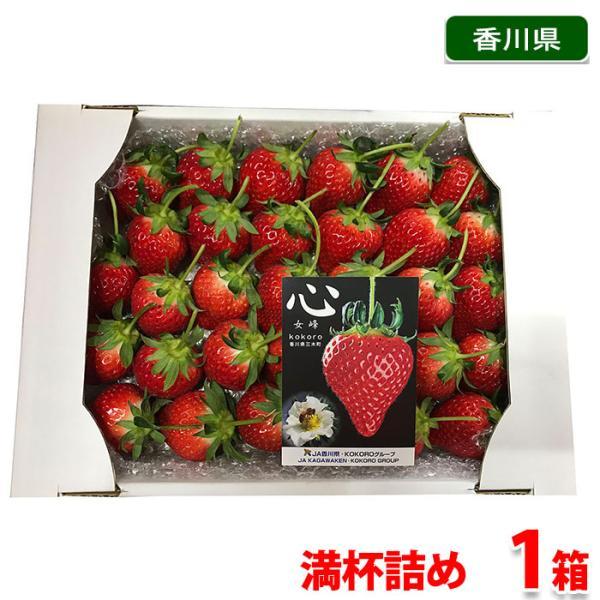 【送料無料】香川県産 いちご 女峰 心 満杯詰め(約30粒) 化粧箱