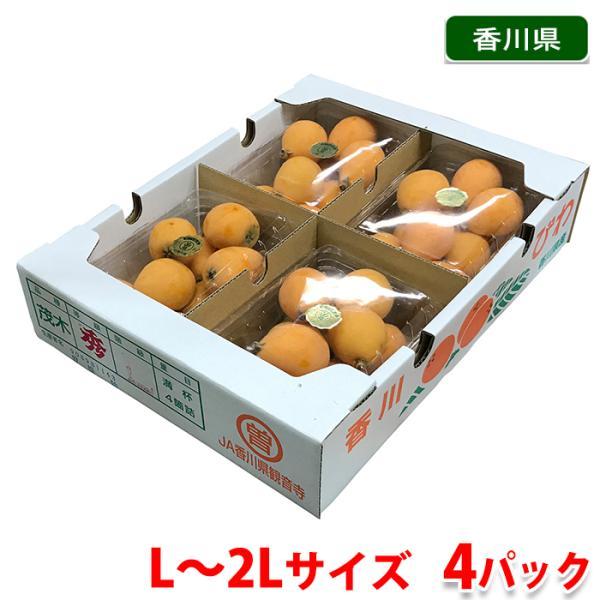 香川県産 讃岐びわ 秀品 L〜2Lサイズ 4パック入(箱)