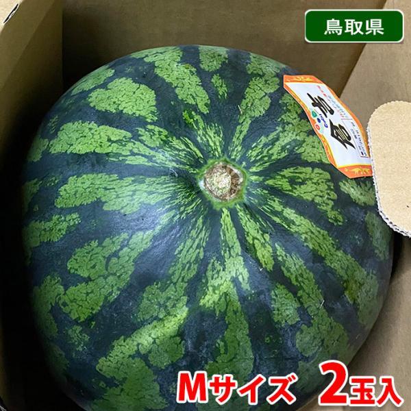 【送料無料】鳥取県産 倉吉すいか 秀品・2L〜4Lサイズ 2玉入(箱)
