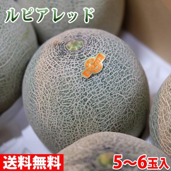 送料無料 鳥取県産 メロン ルピアレッド 秀品 L〜3Lサイズ 5〜6玉入(箱)
