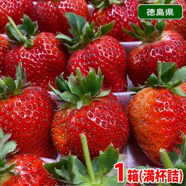 徳島県産 いちご さちのか 満杯詰 大・約30粒入(箱)