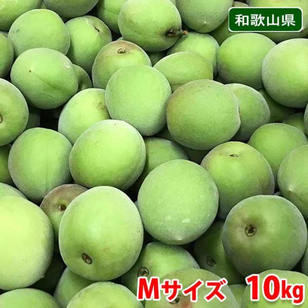 和歌山県産 南高梅 2Lサイズ 10kg