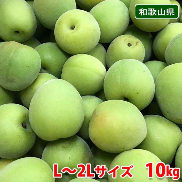 送料無料 和歌山県産 南高梅 秀品 L〜2Lサイズ 10kg