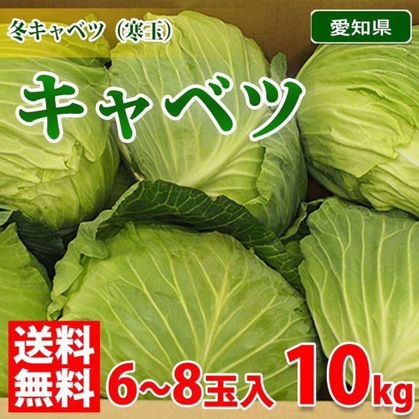 【送料無料】愛知県産 キャベツ 6〜8玉入り 10kg