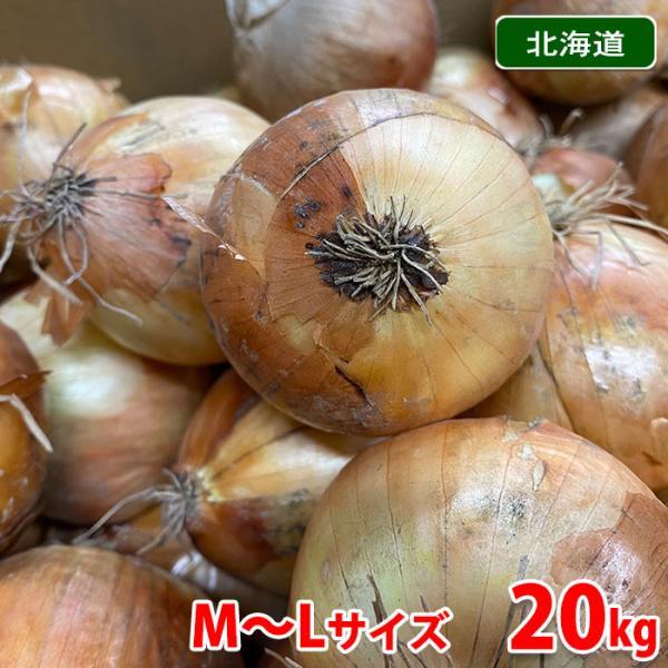 【送料無料】北海道産 玉ねぎ 北見F1 20kg
