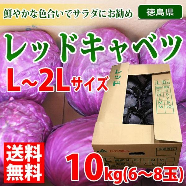 【送料無料】徳島県産 レッドキャベツ L〜2Lサイズ 10kg(6〜8玉入り)