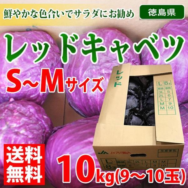 【送料無料】徳島県産 レッドキャベツ S〜Mサイズ 10kg(9〜10玉入り)