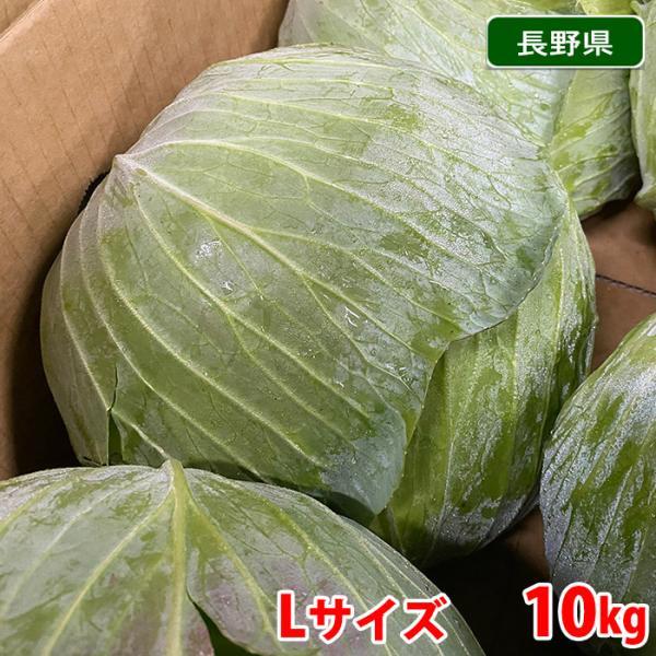 【送料無料】長野県産 キャベツ 秀品 Lサイズ 8〜9玉入 10kg