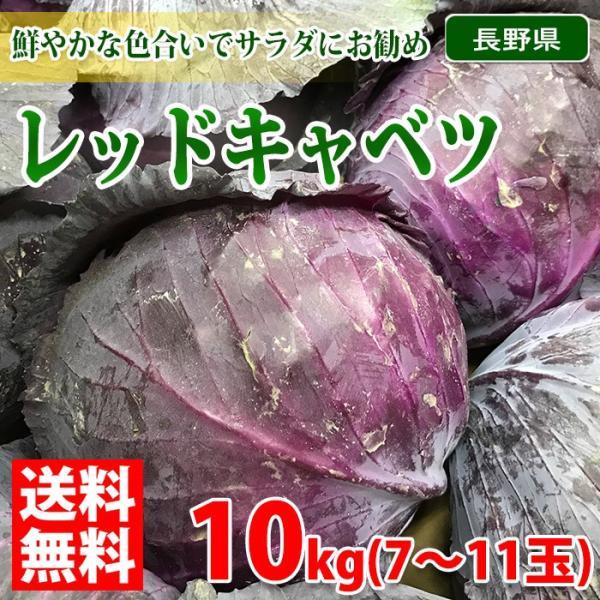 【送料無料】長野県産 レッドキャベツ M〜Lサイズ 10kg(7〜11玉入り)