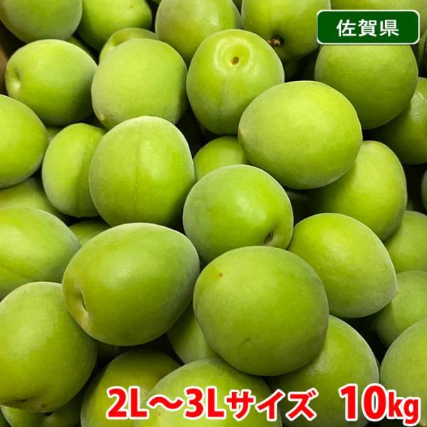 【送料無料】佐賀県産 古城梅(ごじろうめ) 2L〜3Lサイズ 10kg