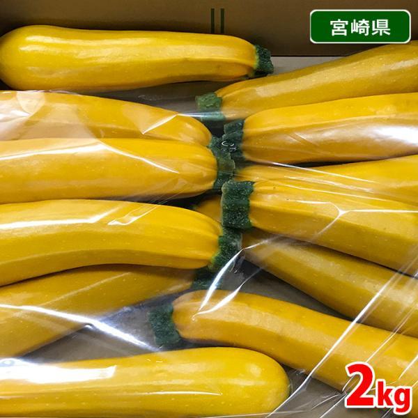 宮崎県産 ズッキーニ(黄色)8〜12本入り/箱