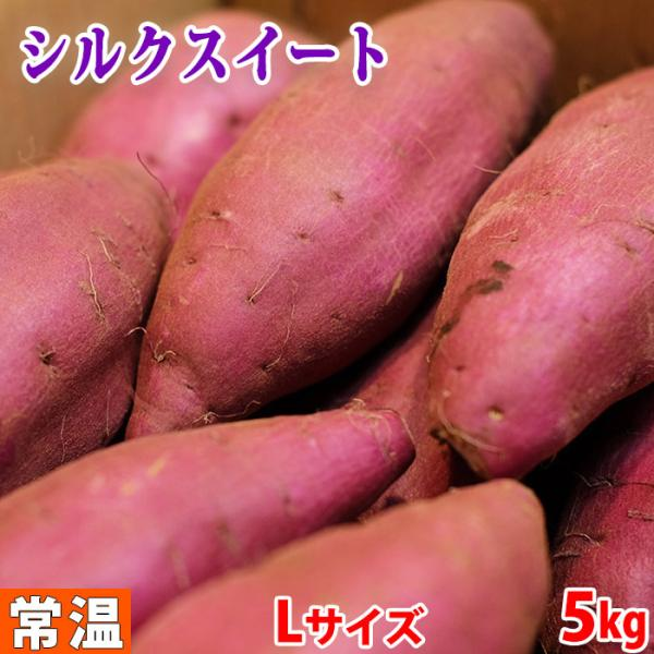 千葉県産 さつまいも シルクスイート 秀品 Lサイズ(13本前後入)約5kg(箱)