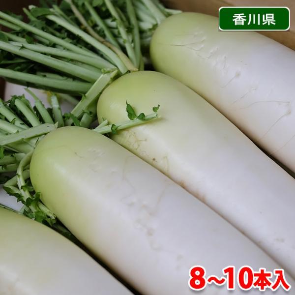【送料無料】香川県産 大根(春だいこん)L〜2Lサイズ 10〜8本入(箱)