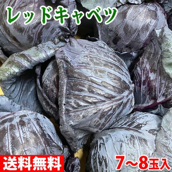 送料無料 鹿児島県産 レッドキャベツ A等級 7〜8玉入り(箱)