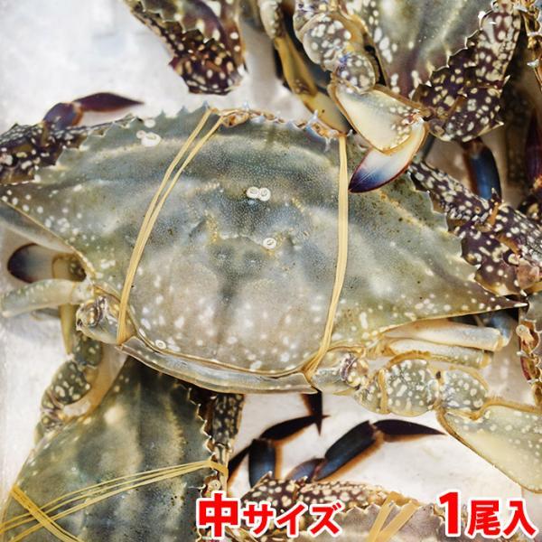 兵庫県産他 活 ワタリガニ(わたりがに)1尾 約500g前後