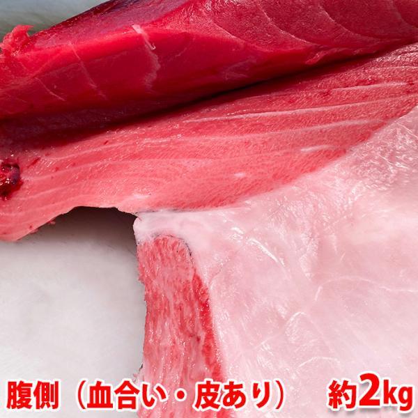 生・本マグロ 大トロ・中トロ・赤身ブロック 約2kg(国産・養殖)腹側