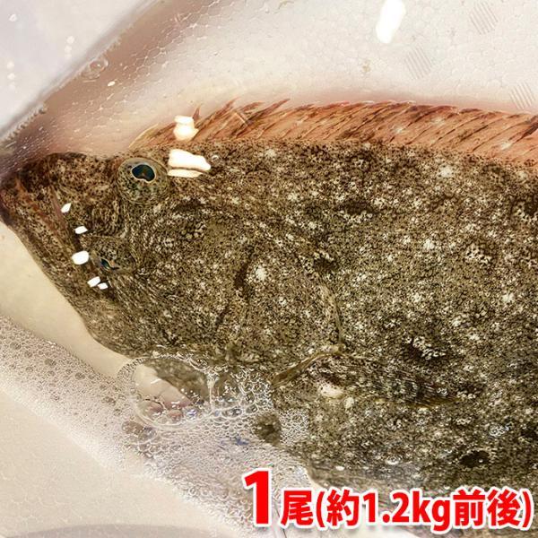 島根県産他 ヒラメ(天然) 1尾(約1.2kg前後)