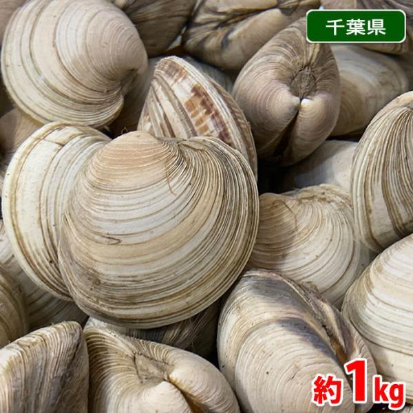 千葉県産 ホンビノス貝(白はまぐり) 約1kg