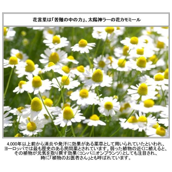 カモミールのお花のシュガーポット(カフェ食器 砂糖入れ 蓋物 陶器 シュガーディスペンサー) puchiecho 04