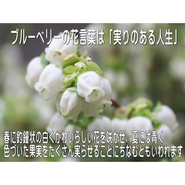 ブルーベリーのお花みたいなデミタスカップ&木の葉のソーサー\インスタ映え カップソーサーセット 陶器 おしゃれ 美濃焼  北欧風 日本製|puchiecho|03