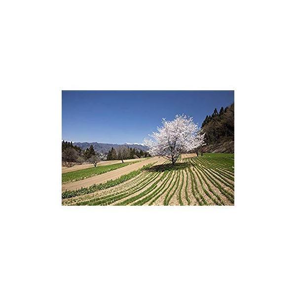 KD-2 天地の農カレンダー(2020年版カレンダー)|r-ainet|04