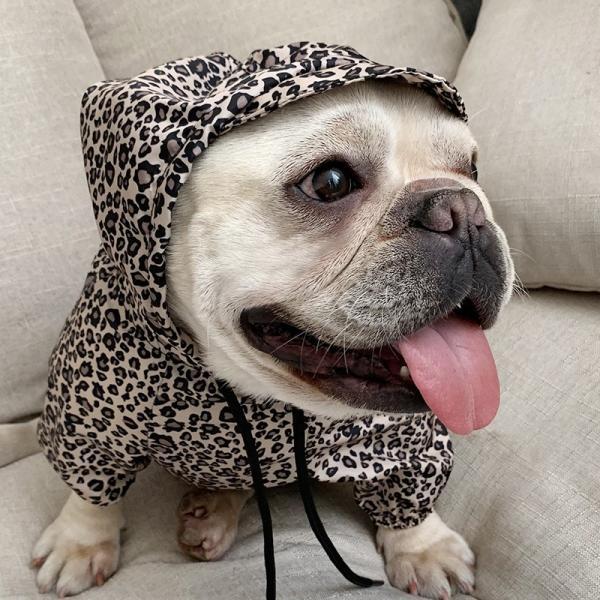 犬とお揃い 犬 ペアルック 犬とお揃いコーデ パーカー春秋 トップス ペットとお揃い ペット親子 犬の服 犬/猫と飼い主のペアルック 小型犬 犬服 ドッグウェア rainbow18-store