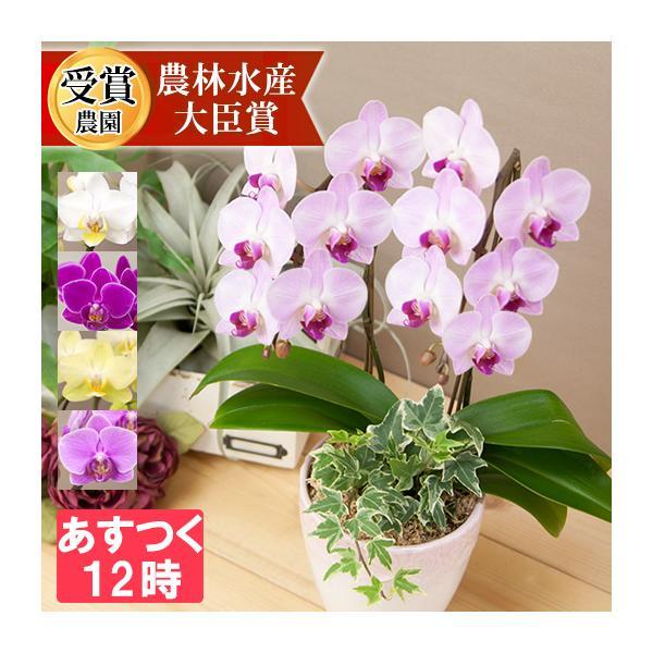 胡蝶蘭 開店祝い 開業祝い 結婚祝い 誕生日 仏花 お供え ギフト コチョウラン 2本立ち観葉寄せ 5378 [r-eraberu-2f ]|ranbo
