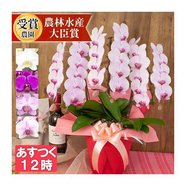 胡蝶蘭 ラブリーエフェクト 3本立ち 蕾含む30輪程 開店祝い 開業祝い 開院祝い 誕生日 お祝い 10800 [r-lovery3f]|ranbo