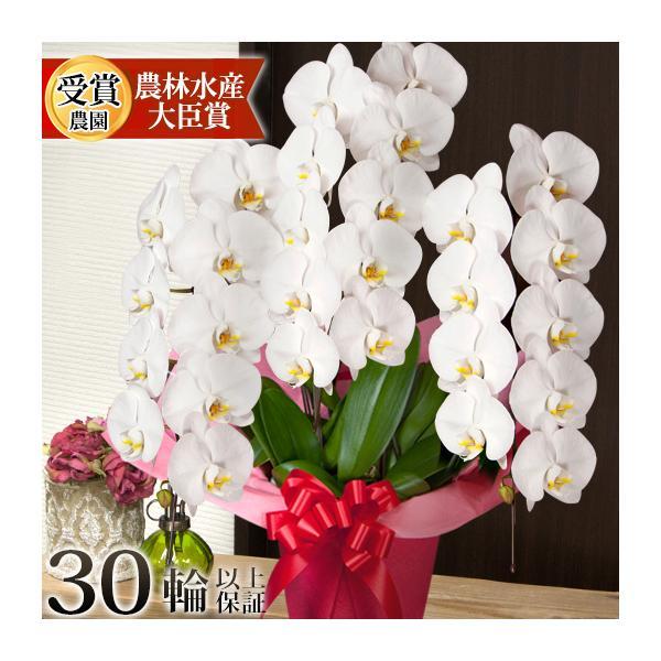 胡蝶蘭 開店祝い 大輪 ギフト 開業祝い 母の日  開院 お供え 3本立ち蕾含む24輪以上 10800 [r-midi6f]|ranbo