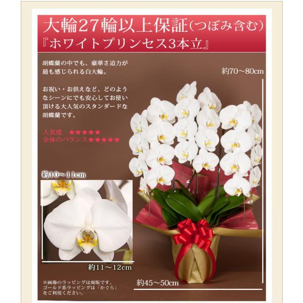 胡蝶蘭 開店祝い 大輪 ギフト 開業祝い 母の日  開院 お供え 3本立ち蕾含む24輪以上 10800 [r-midi6f]|ranbo|02