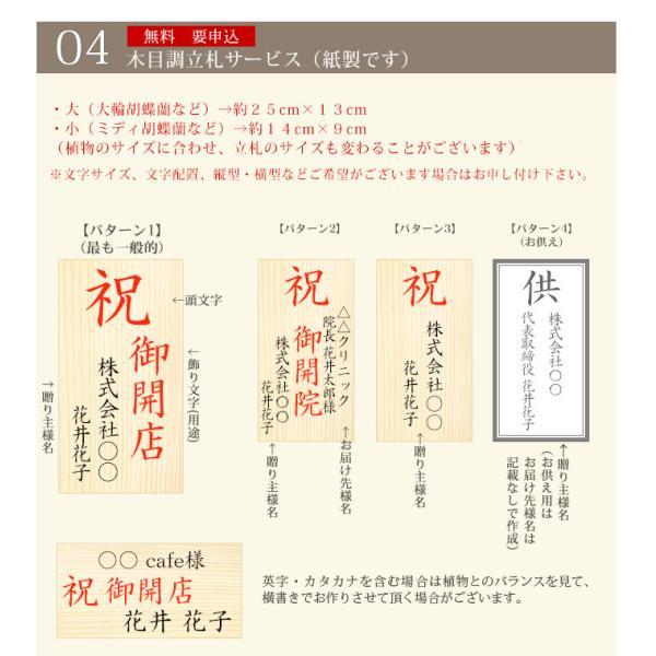 胡蝶蘭 開店祝い 大輪 ギフト 開業祝い 母の日  開院 お供え 3本立ち蕾含む24輪以上 10800 [r-midi6f]|ranbo|08