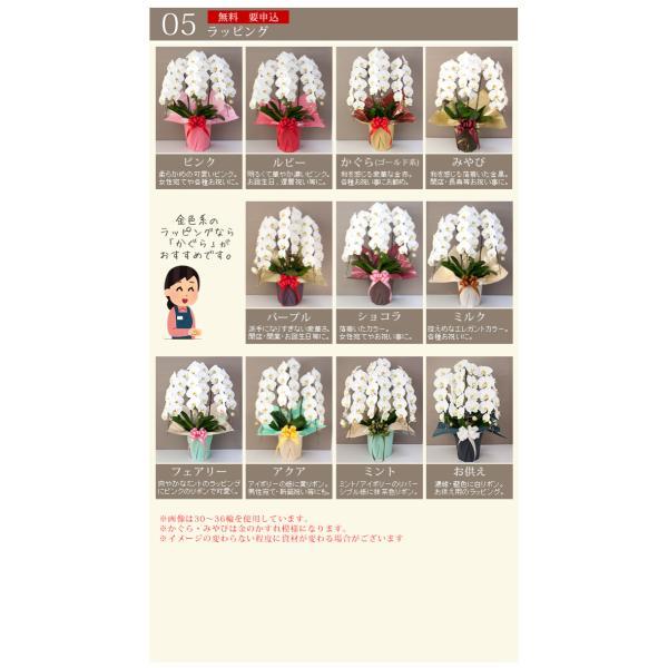 胡蝶蘭 あすつく 開店祝い 大輪 開業祝い 正月 お歳暮 お供え 3本立ち 蕾含む24輪以上 10000 [r-midi6f]|ranbo|09