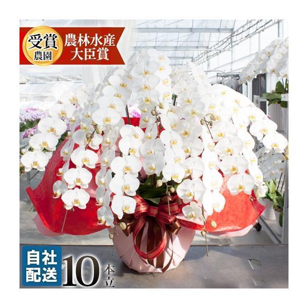 胡蝶蘭 開店祝い 開業祝い 開院祝い 大輪 正月 お歳暮 ギフト お祝い お供え 10本立ち 108000 [r-tokubetu10f-fw]|ranbo