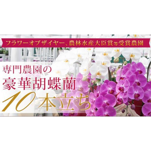 胡蝶蘭 開店祝い 開業祝い 開院祝い 大輪 正月 お歳暮 ギフト お祝い お供え 10本立ち 108000 [r-tokubetu10f-fw]|ranbo|02
