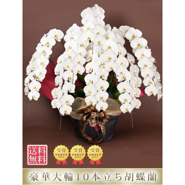 胡蝶蘭 開店祝い 開業祝い 開院祝い 大輪 正月 お歳暮 ギフト お祝い お供え 10本立ち 108000 [r-tokubetu10f-fw]|ranbo|03